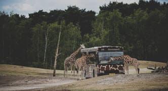 Safarikamp 8-13